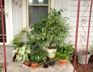 imagen ¡Saca afuera tus plantas de interior en verano!