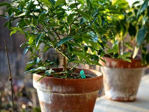 Sacar las plantas de interior 2