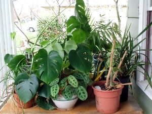 Sacar las plantas de interior 3