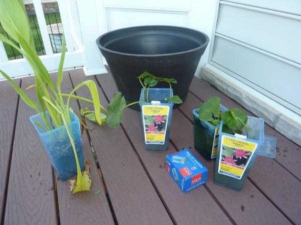 Plantas flotantes en una maceta 1