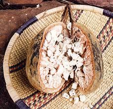 Cultivar un baobab 2