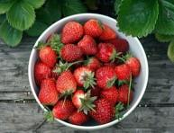 imagen ¿Cuándo hay que recolectar la fruta?