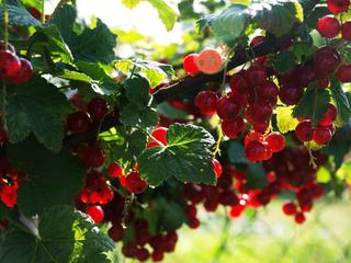 Momento para la recolección de frutas 3