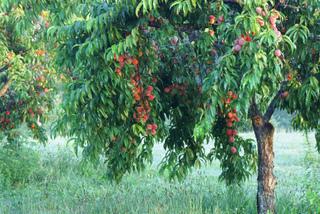 Momento para la recolección de frutas 5