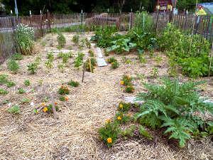Uso de la paja agrícola en el jardín 2