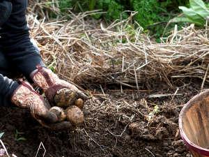 Uso de la paja agrícola en el jardín 5