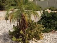 imagen Un jardín desértico en Palm Springs