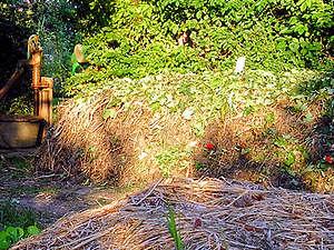 Los distintos tipos de compostadoras 6