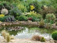 imagen Mantener el estanque saludable en verano