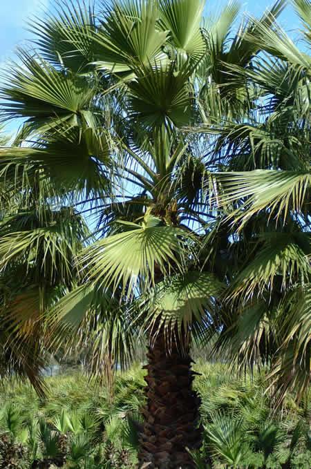 Plantas resistentes a la sequía 1