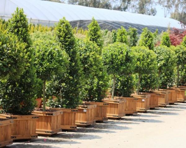 Cinco plantas resistentes a la sequ a for Plantas perennes exterior