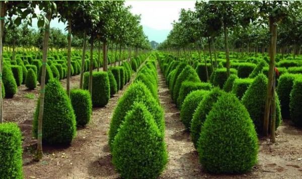 Cinco plantas resistentes a la sequ a for Arbustos para macetas exterior