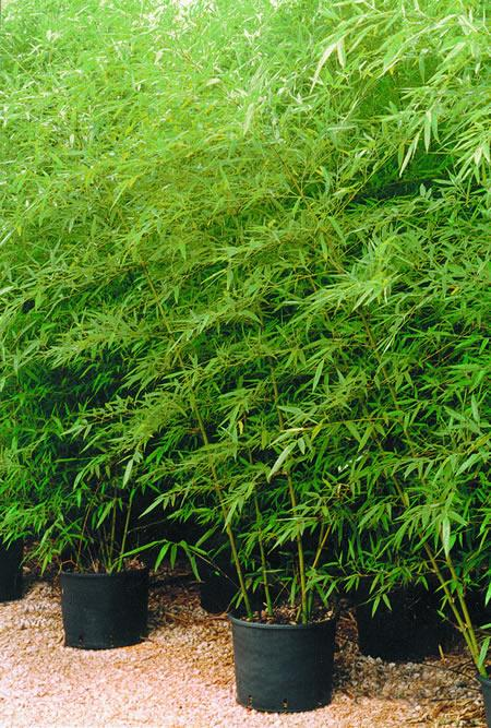 Plantas resistentes a la sequía 4