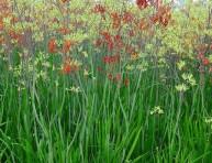 imagen Cinco plantas resistentes a la sequía