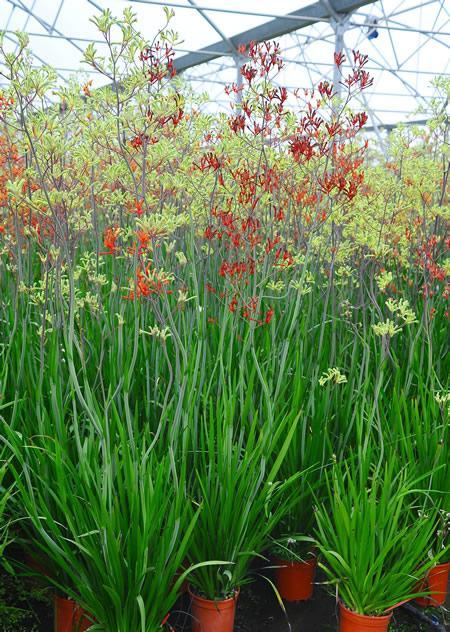Plantas resistentes a la sequía 5