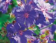 imagen Plantas de ribera