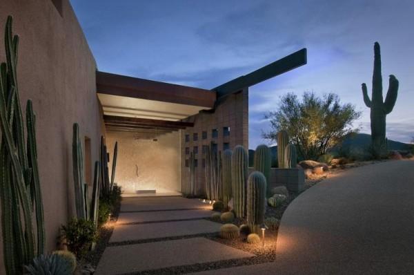 Cactus en tu jardín 1
