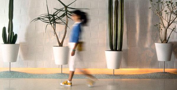 Cactus en tu jardín 2