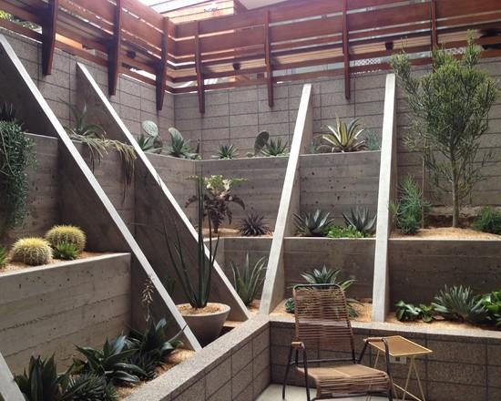 Cactus en tu jardín 4