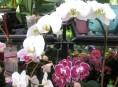 imagen Para iniciarse en el cultivo de orquídeas