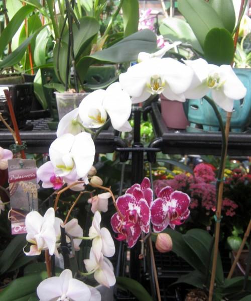 Cultivo de orquídeas 2