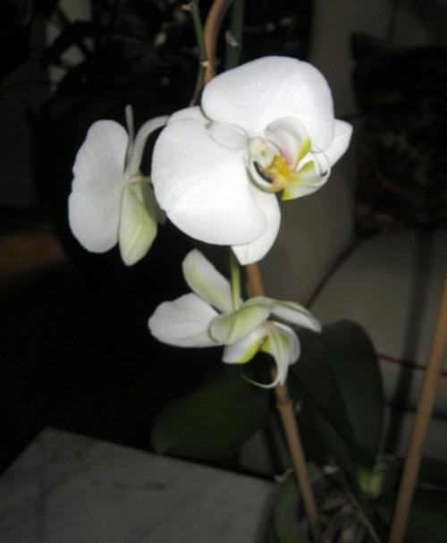 Cultivo de orquídeas 3