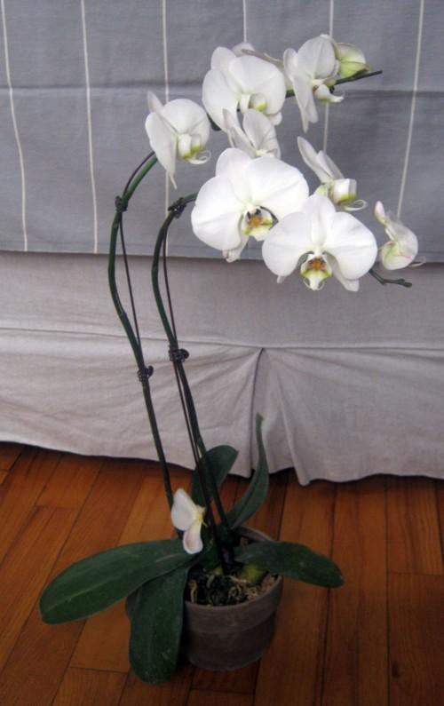 Cultivo de orquídeas 4