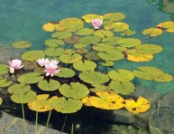 imagen Piscinas naturales: una opción ecológica