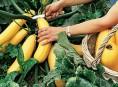 imagen Tips para prolongar la cosecha en nuestra huerta