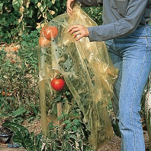 tips-para-prolongar-la-cosecha-de-nuestra-huerta-07
