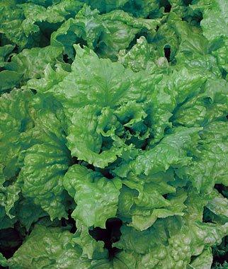 verduras-y-hortalizas-de-otono-03