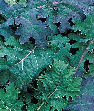 verduras-y-hortalizas-de-otono-06