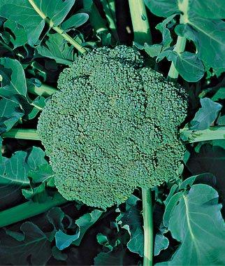 verduras-y-hortalizas-de-otono-07