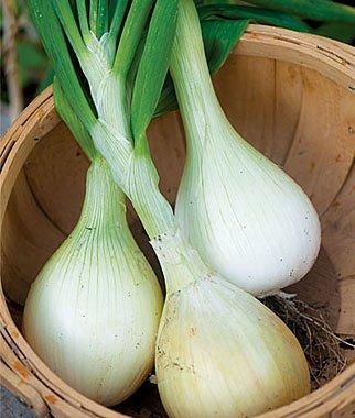 verduras-y-hortalizas-de-otono-08