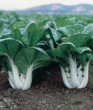 verduras-y-hortalizas-de-otono-09