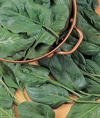 verduras-y-hortalizas-de-otono-10