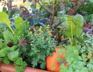 imagen 4 buenas razones para combinar hortalizas y flores