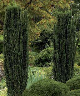 Ambientes en el jardín 4
