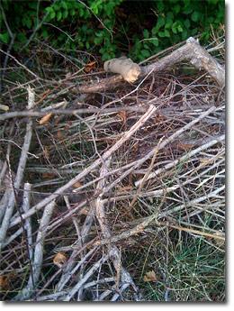 Hugelkultur cultivo de tierras frías 1