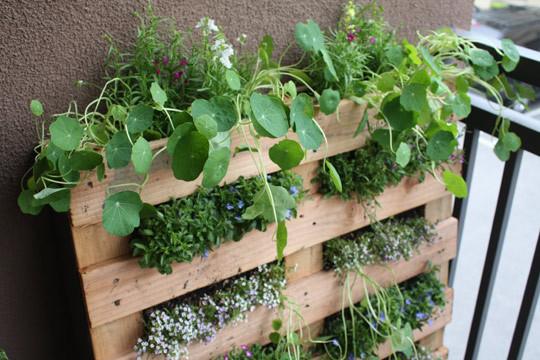 Macetas diferentes para tu jardín 6