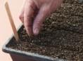 imagen Preparar un buen suelo para semilleros