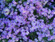 imagen 7 razones para elegir las plantas anuales sobre las perennes