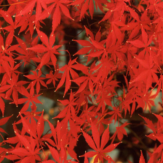 Arces japoneses 7