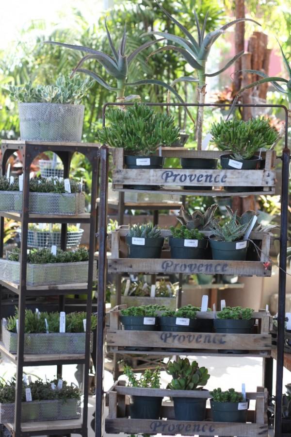 consejos-para-cultivar-suculentas-en-interior-02