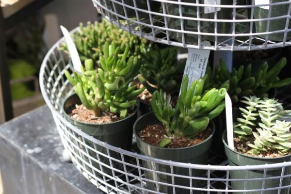 consejos-para-cultivar-suculentas-en-interior-03