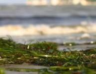 imagen Consejos para el uso de algas en el jardín
