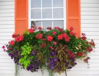 imagen Tips para planificar las macetas para las ventanas