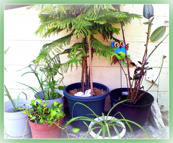 Plantas de interior seguras para ni os y mascotas Plantas seguras para gatos