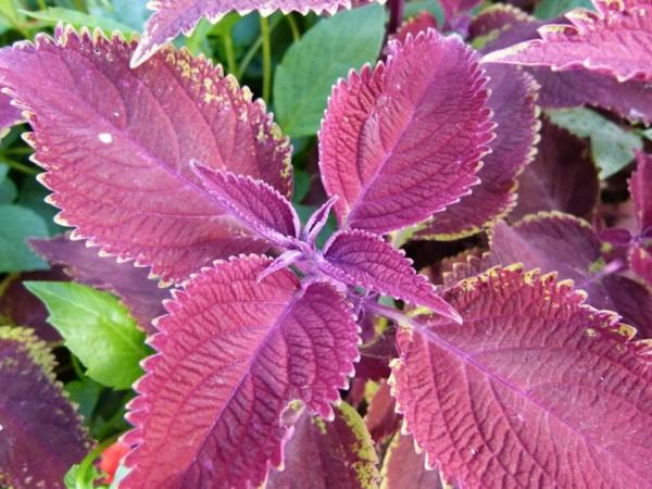 Plantas de interior seguras para ni os y mascotas - Variedades de plantas de interior ...