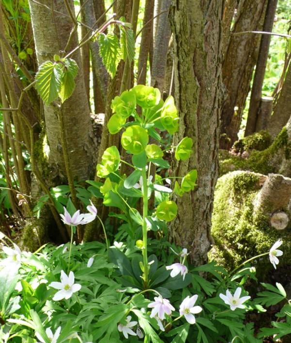 Plantas para cultivar bajo los rboles for Arboles y plantas de jardin